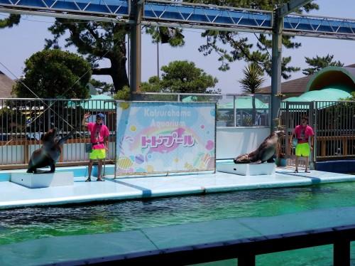 桂浜水族館 トドショー