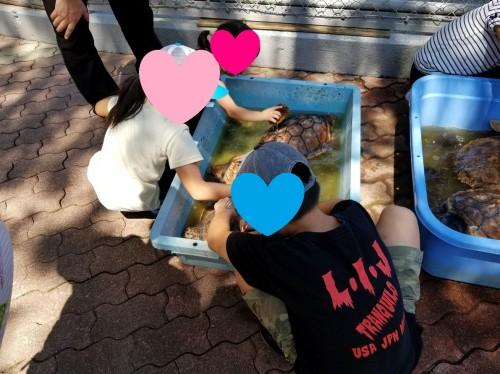 高知 桂浜水族館 亀の甲羅洗い